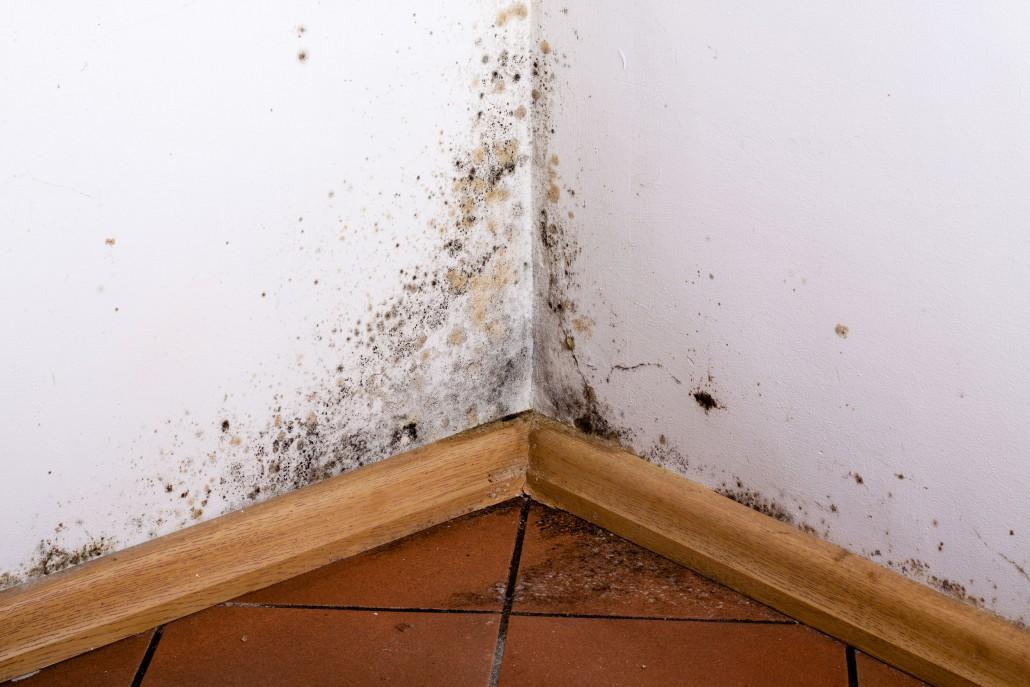 Odstranění plísní, mechů, řas a hub